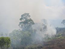 Incendie à Nuku Hiva: 600 hectares de forêt dévastée, une espèce endémique menacée