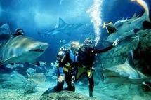 Melbourne: Attaquée par un requin en plein aquarium