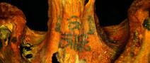 Des momies égyptiennes vieilles de 4 000 ans ont été découvertes, porteuses de spectaculaires tatouages sans doute à but cultuels.