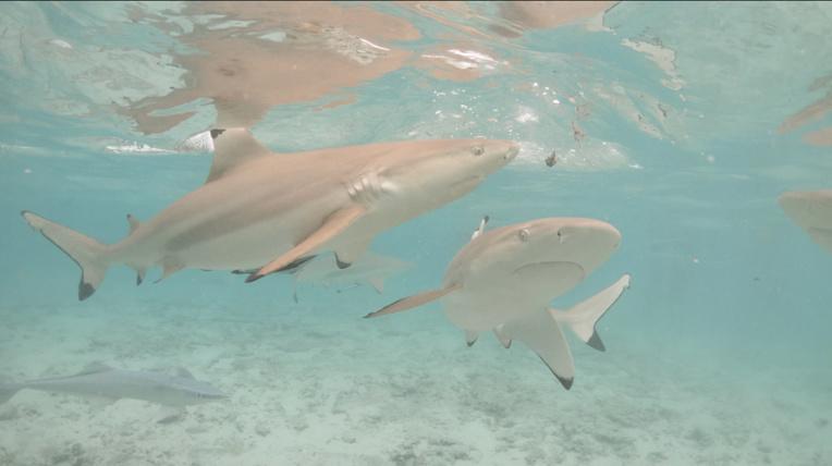 """Enfant mordu par un requin : """"Il est interdit d'interagir avec des espèces sauvages"""""""