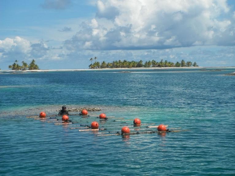 Un plongeur prêt à immerger l'une des stations de collectage de bénitier.