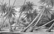 En forant le sol corallien de l'atoll de Hao, Belcher et son équipe entendaient bien percer le secret des Tuamotu et de toutes les îles basses.