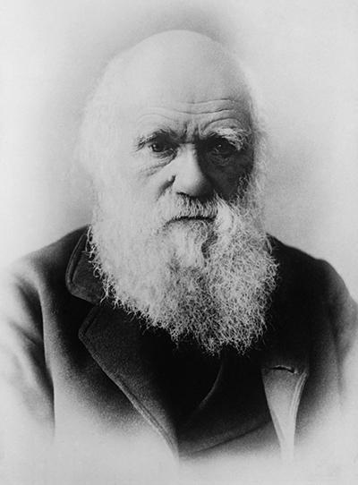 Alors que Belcher croyait que les atolls n'avaient pas de fondations solides, l'intuition géniale de Darwin lui permit de comprendre qu'il s'agissait en fait d'anciens volcans ayant disparu et dont ne subsistait que la couronne récifale.