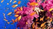 Changement climatique: coût pour les océans estimé à 2.000 milliards USD
