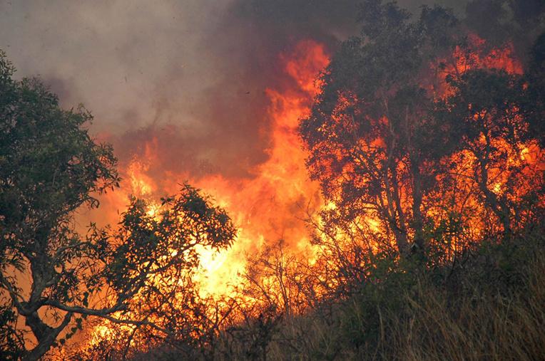 Important incendie de forêt à la périphérie de Nouméa