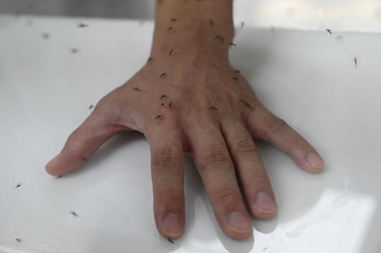 Guadeloupe: 476 cas de dengue confirmés depuis juillet