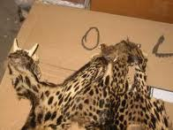 Des centaines d'animaux et objets issus d'espèces protégées saisis à Roissy