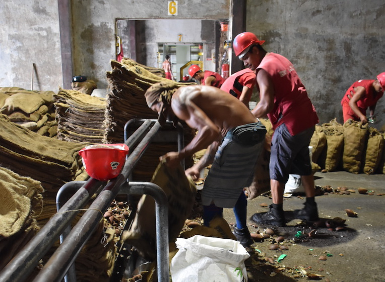 Coprah : Le rapport qui veut secouer le cocotier