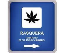 Espagne: des villageois votent sur un projet de plantation de cannabis