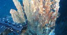 Nodules et terres rares: La ruée vers les fonds marins du Pacifique