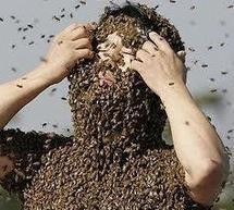 Hongrie: des abeilles sèment la panique lors d'une grande randonnée