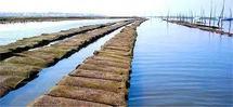 Huîtres d'Arcachon : Le Maire s'engage à porter le dossier à la commission
