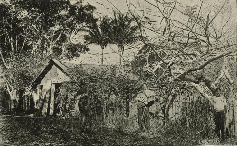 L'une des premières installations des Jardine lorsqu'ils décidèrent de développer le troupeau de bovidés qu'ils avaient réussi à conduite jusqu'à Somerset.
