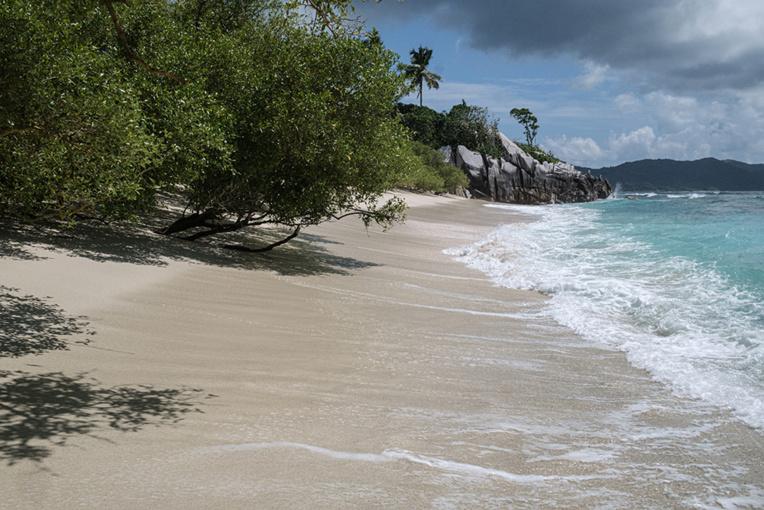 L'île Cousin ou le retour à la nature pour sauver un oiseau
