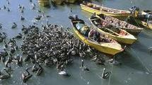 Chili: 2.000 oiseaux retrouvés morts sur des plages du centre du pays