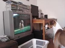 """Dog TV"""", ou quand la télé, c'est pour les chiens"""