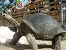 Pas de lézard, les tortues sont bien cousines des crocodiles et des oiseaux