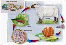 """Des fourmis et moutons promus """"ingénieurs"""" de la restauration écologique"""