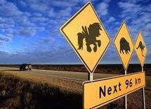 Fort taux de migration des Néo-zélandais vers l'Australie
