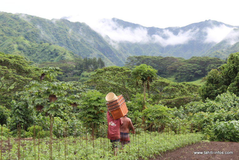 Neuf nouveaux pesticides interdits en Polynésie
