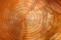 La trace d'un événement cosmique mystérieux découverte dans des arbres