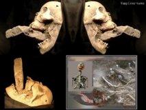 Les squelettes de vampires potentiels découverts en Bulgarie
