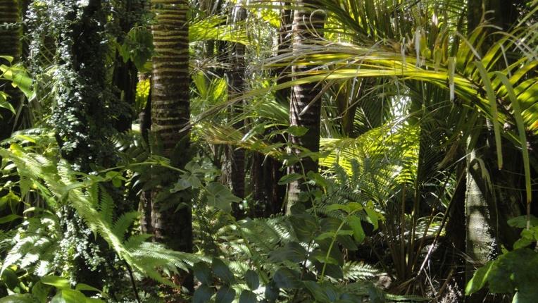 Changement climatique: l'Amazonie pourrait disparaître en 50 ans (étude)