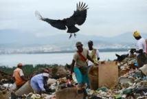 Un petit paradis écologique sauvé des ordures dans une favela de Rio
