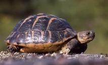 La douane ukrainienne arrête un trafiquant de... tortues