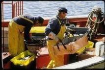 La pêche française mise en danger par Bruxelles, selon les professionnels