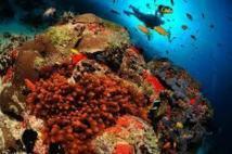 """Les Maldives vont devenir """"la plus grande réserve marine du monde"""""""