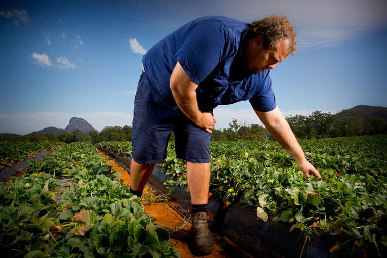 Coronavirus: en Australie, les agriculteurs inquiets de la fermeture des frontières