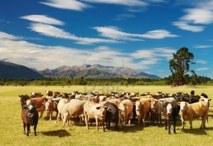 Coup de fouet pour la croissance néo-zélandaise