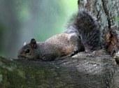 La grande évasion des écureuils d'un zoo de Tokyo pendant le typhon Guchol