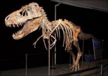 La justice américaine saisit un tyrannosaure mongol de 70 millions d'années