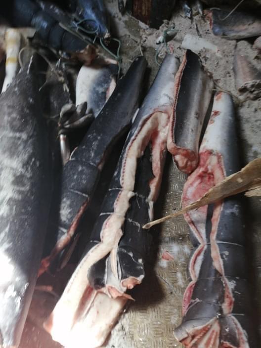 Des requins dans le navire échoué, la Fape attaque
