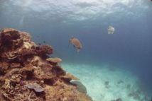 Un robot sous-marin français analysant les fonds testé en Méditerranée