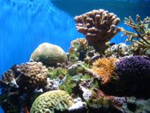 Un bouleversement climatique a détruit des coraux durant 2.500 ans