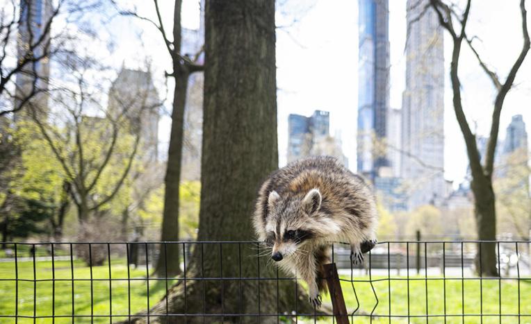 Central Park, plus que jamais havre de paix face à la pandémie