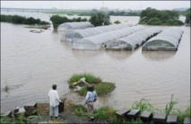 Japon: les évacués rentrent chez eux, mais de nouvelles pluies arrivent