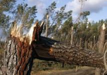 Contribuer à la protection des forêts en achetant ses cahiers de classe