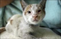 Un chaton survit à un voyage de deux semaines dans un container, sans manger