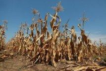 La grave sécheresse qui frappe les Etats-Unis n'est pas près de se terminer