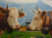 Autriche : des villageois se soulèvent contre les cloches de vache