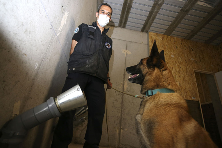 A Ajaccio, des chiens entraînés à détecter une éventuelle odeur du Covid-19