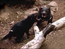 Des vandales attaquent un zoo en Australie: 9 oiseaux tués, 60 animaux échappés