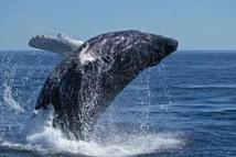 Un marin sud-africain heurte une baleine et se casse le bras
