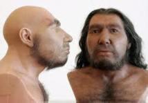 Génétique: humains modernes et Néandertal ne se sont peut-être pas mélangés