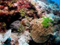 Les milieux marins d'Australie sévèrement dégradés par le réchauffement