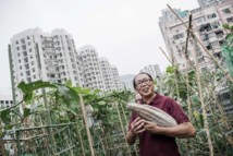 A Hong Kong, concombres et carottes cultivés entre ciel et terre